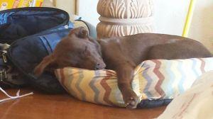 Beau napping